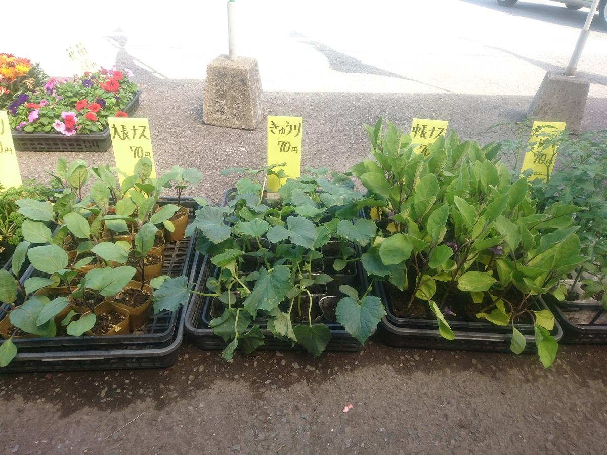 【情報】夏野菜は今が植え時!(ひぐらし茶屋)