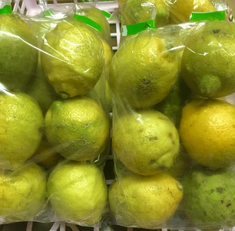 【出荷情報】地元産のレモン(ひぐらし茶屋)