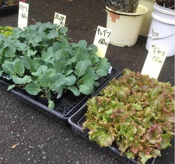 【出荷情報】野菜の苗(ひぐらし茶屋)