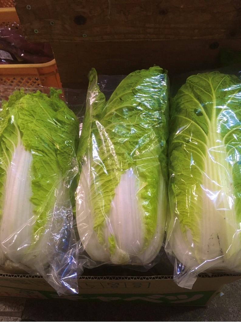 【出荷情報】白菜(ひぐらし茶屋)