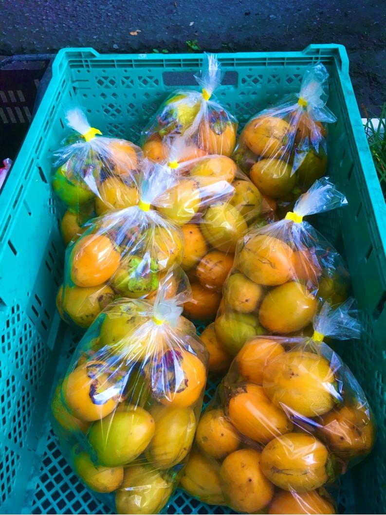 【出荷情報】干し柿用の柿(ひぐらし茶屋)