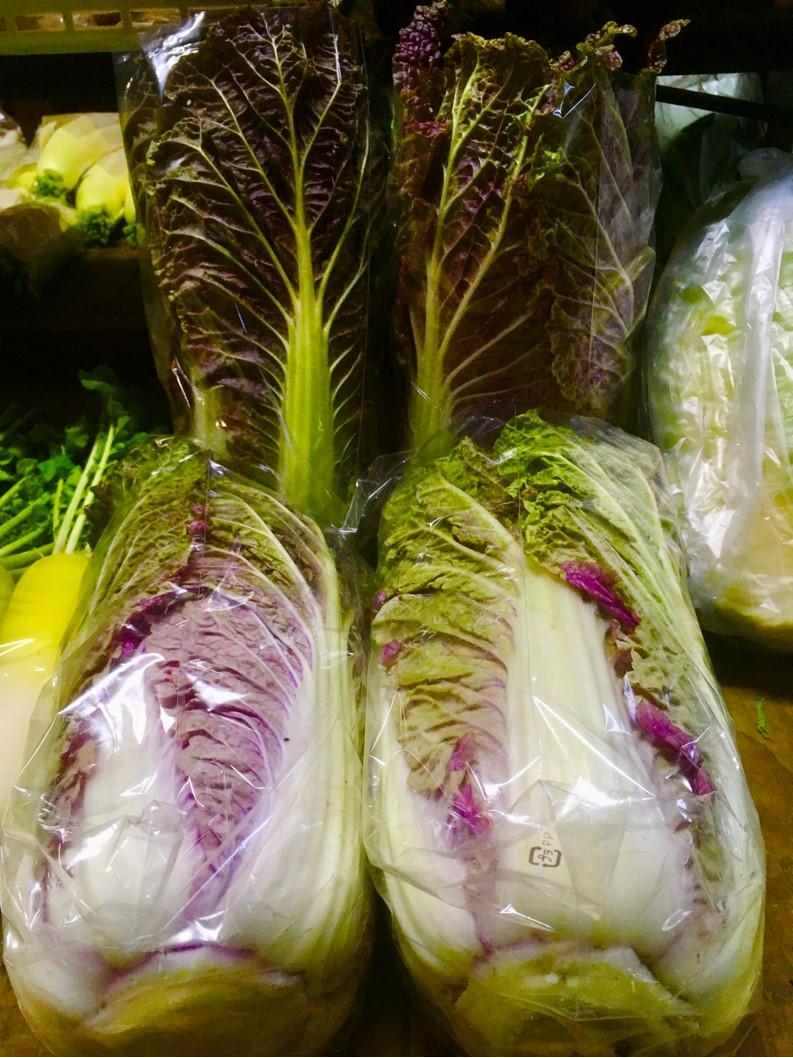 【出荷情報】紫白菜(ひぐらし茶屋)